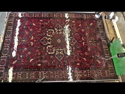 Cleaning vegetable dye Oriental rug from dog cat urine odor