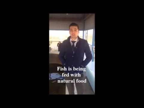 sturgeon fish farming  organic fish products natural food Bio Agro