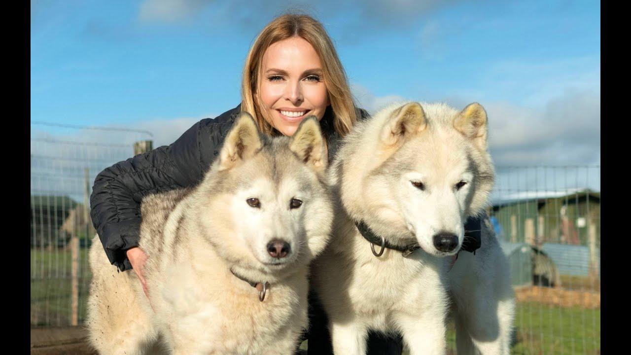 The Siberian Husky Dog Animal Watch Youtube