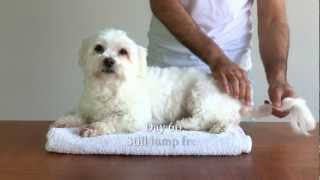 Dog Vs Lump Hd How Destroy Cysts Tumours
