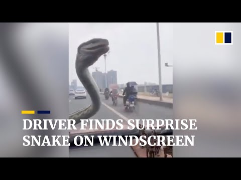 Driver In China Finds Surprise Snake On His Windscreen