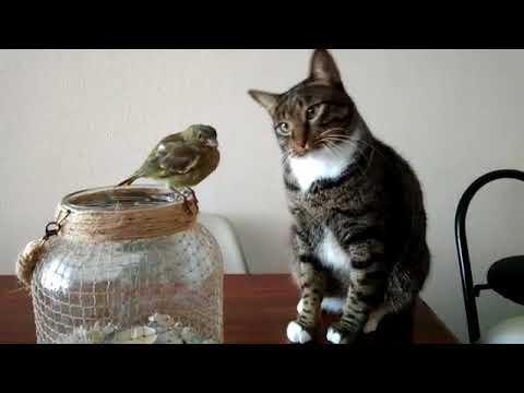A Cat Gently Caresses A Bird