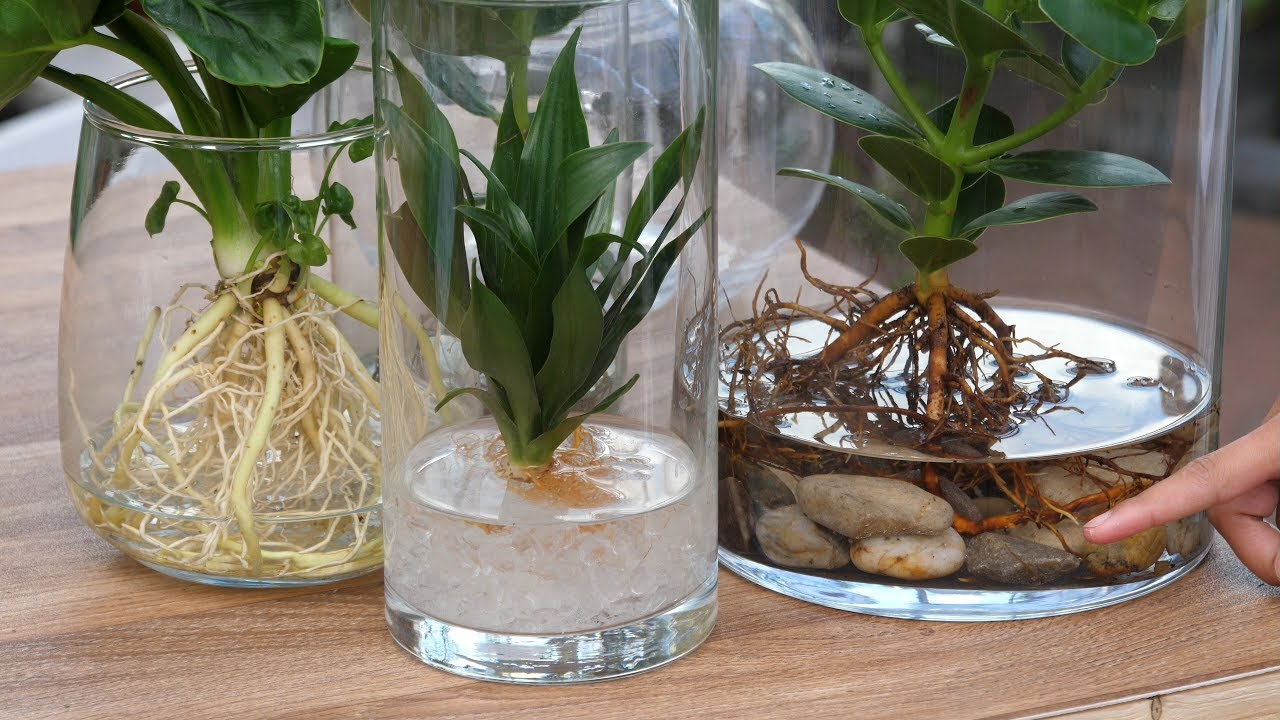 orchideen ohne erde aufhängen