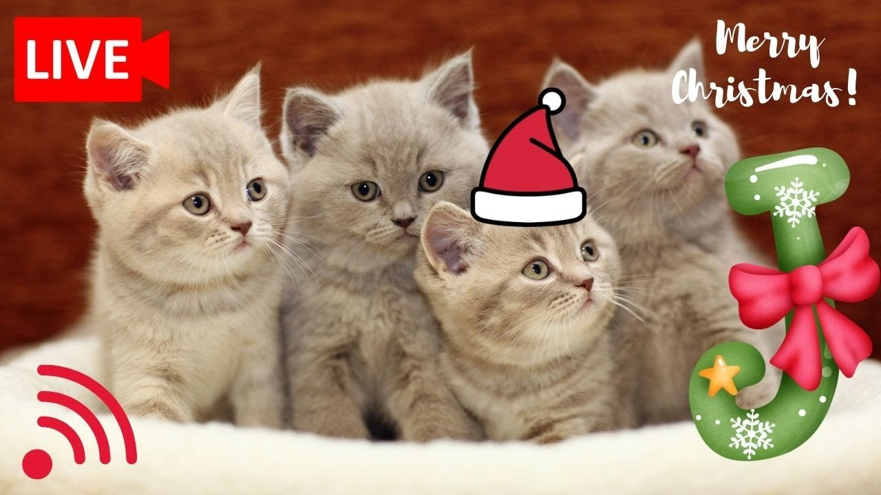 🔴Pets Cam and Christmas Songs, Music To Relax