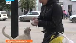 Преданный Кот. Русский Хатико!