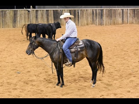 SALLY ROCKS  - 2012 Brown Mare by Rockin W in training with Jesse Lennox