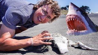 that's a SHARK bite