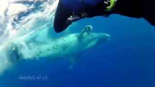 Whale encounter in Tonga and bull shark in Fiji