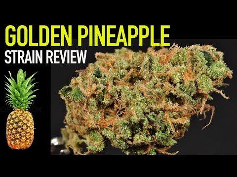 Strain Review: Golden PIneapple