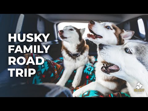 Road Trip With Dogs | HUSKY SQUAD Vlog