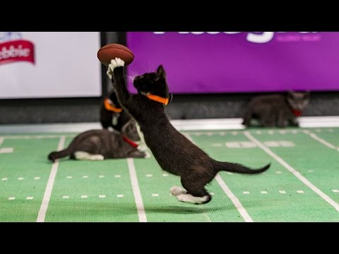 Jerry Mice finds an Open Kitten _ Kitten Bowl III