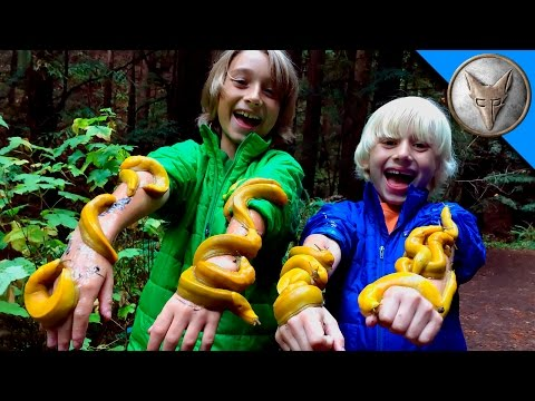 Thumbnail: SLIMED by GIANT SLUGS!