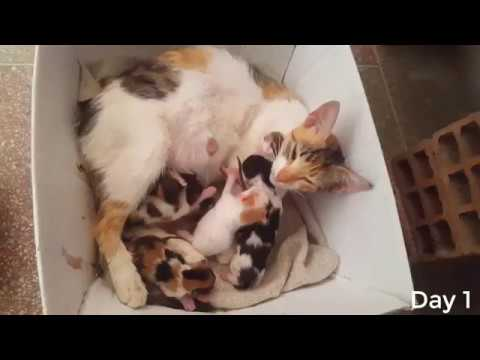 Street Cat Gives Birth to 6 Kittens ( Labor etc....2 Kittens Died :/ )