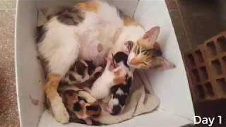 Street Cat Gives Birth to 6 Kittens ( Labor etc....2 Kittens Died :( )