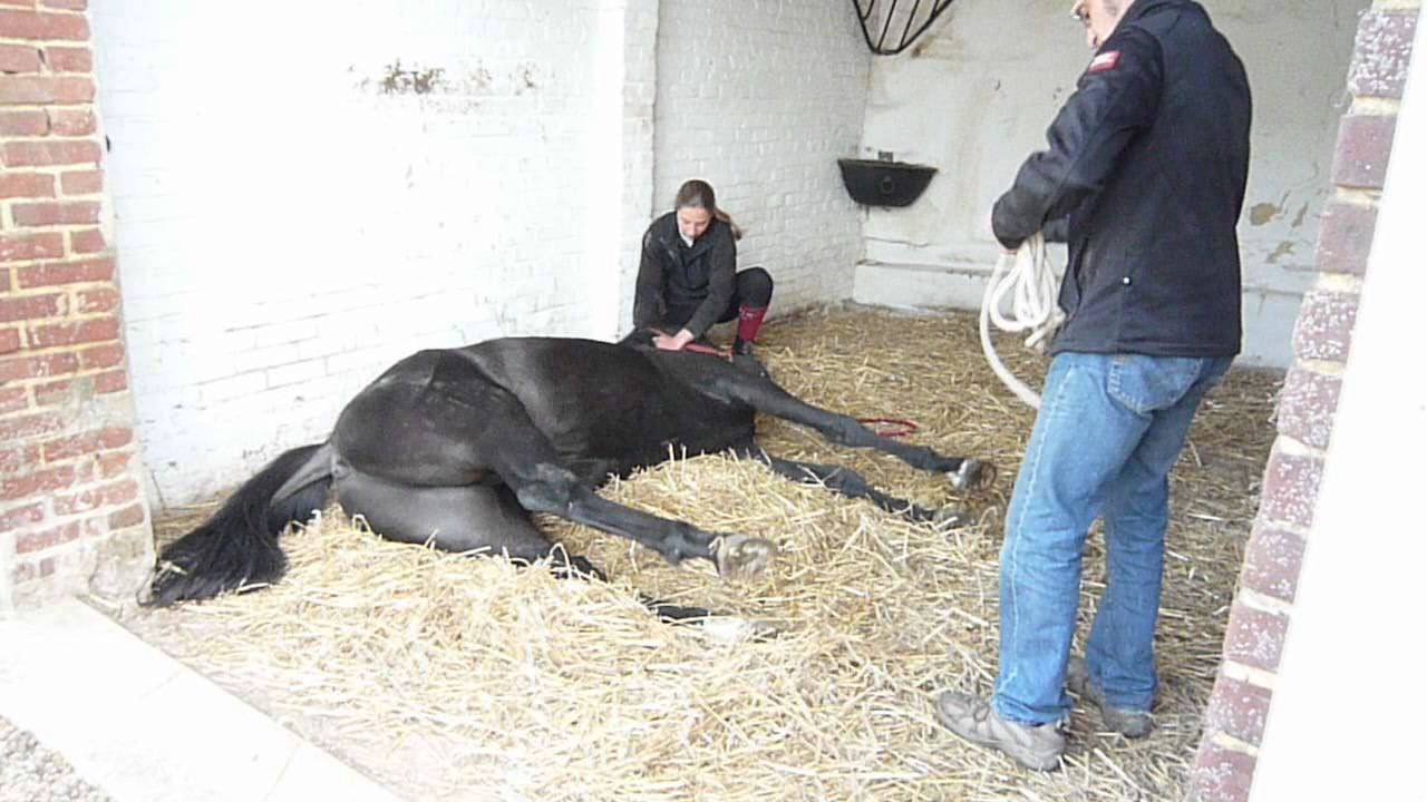 anesthésie d'un cheval - YouTube