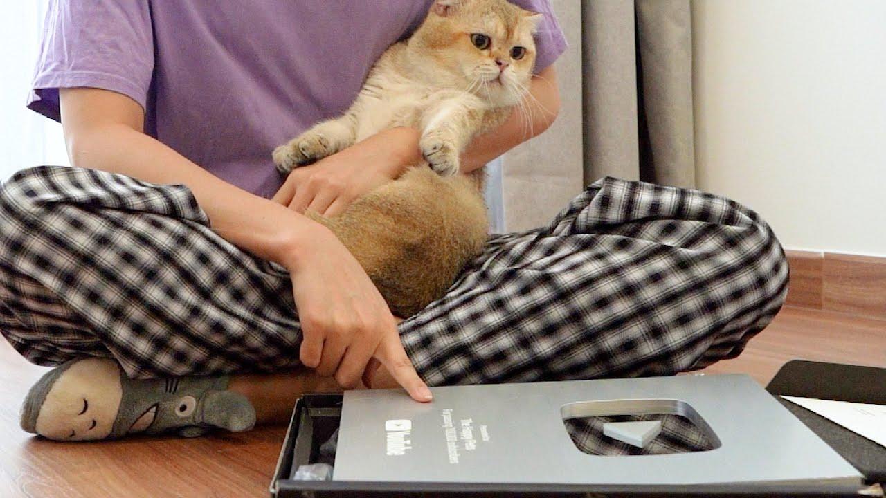 Mèo Salmon nhận nút bạc như thế nào? #shorts