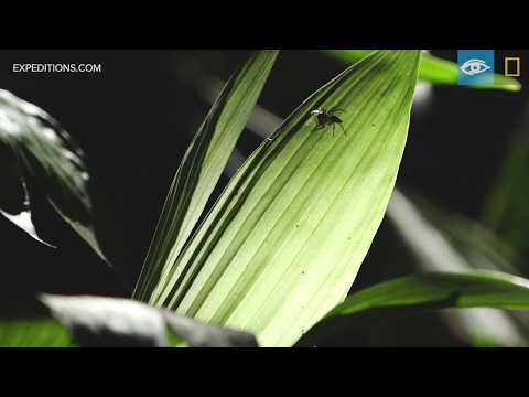 Under the Rainforest Canopy | Costa Rica & Panama | Lindblad Expeditions-National Geographic