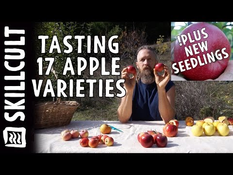 Tasting 17 Apple Varieties and New Seedlings Ripening