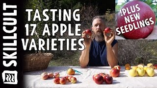 Gambar cover Tasting 17 Apple Varieties and New Seedlings Ripening