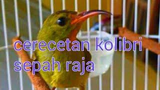 Download Lagu Suara cerecetan kolibri sepah raja mp3