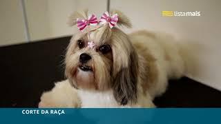 Clínica de Vet Para Pet