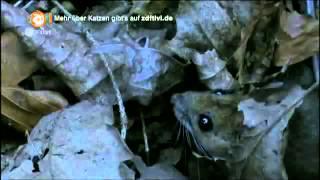Löwenzahn - 240 Katzen - Streuner auf samtigen Pfoten