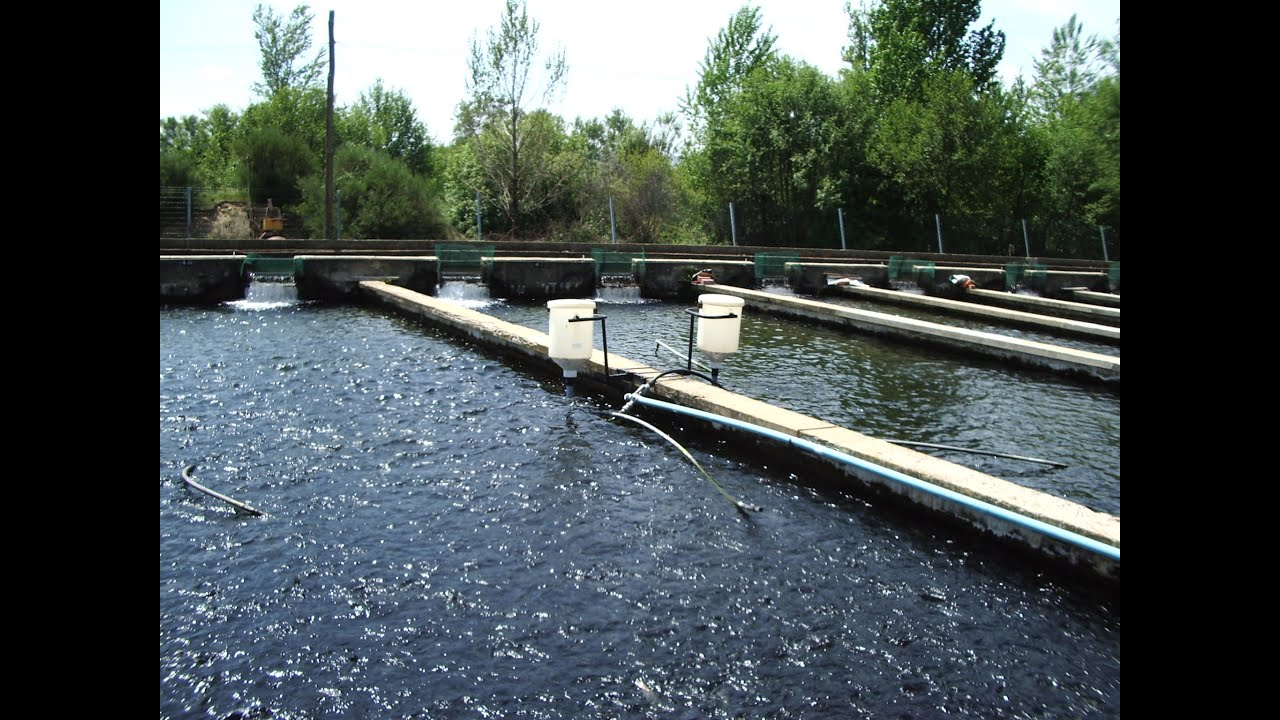 Avances tecnol gicos en acuicultura oxigenaci n con for Tipos de estanques para acuicultura