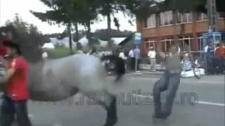 Repeat youtube video Best Horses Fails Compilation HD