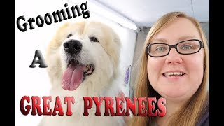 Grooming a Great Pyrenees