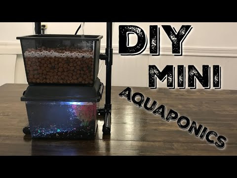 DIY Mini Aquaponics System – Gardening with your fish!