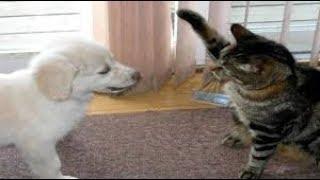 Смешные коты приколы 2017 2019 - Смешные кошки МатроскинТВ