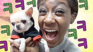 [Q&A] 제일 웃긴 미친개- 땅콩 소개하기! Meet Peanut - SWAGGIEST DOG IN KOREA