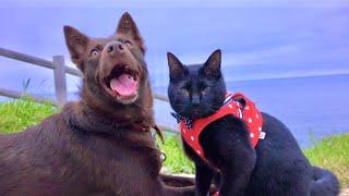 100万本のあるものをワンコと黒猫で探しに行ってみた。