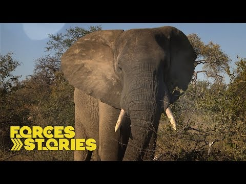 The War On Poaching: Army Veterans On The Front Line | Forces TV