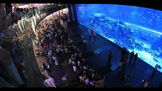 Dubai Part #8 - Dubai Mall Aquarium (oceanarium)