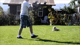 Dog Training Obedience, The Basics.