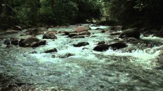 Stock Footage - Small river running through a tropical forest in Costa Rica