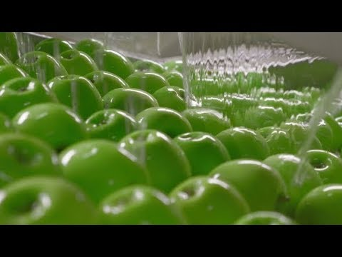 Industrial Farming, Processing and Storage of Apples | Stock Footage - Videohive