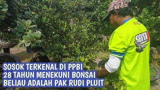 Mr. Rudi Pluit or Rudi Trainer - Master Trainer Bonsai From Indonesia
