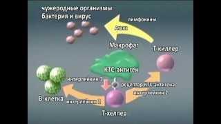 Усиление иммунитета здоровых людей и раковых больных