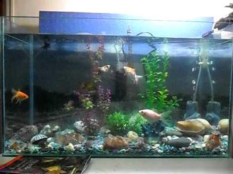 Mi acuario de agua fr a presentaci n youtube for Enfermedades de peces de agua fria