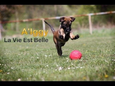 A'Iggy La Vie