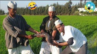 شاهد ما فعلة الحاج سعد في شخلول بسبب خروف العيد لن تصدق ما تراه هتضحك من قلبك 😂