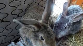 Болезни кроликов: симптомы и их лечение, фото, видео