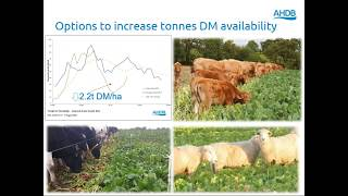Webinar: Utilising the Recommended Grass and Clover Lists for reseeding
