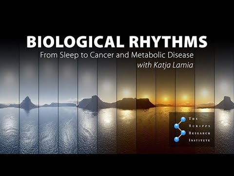 Saturday Science At Scripps Research: Biological Rhythms:From Sleep To Cancer And Metabolic Disease