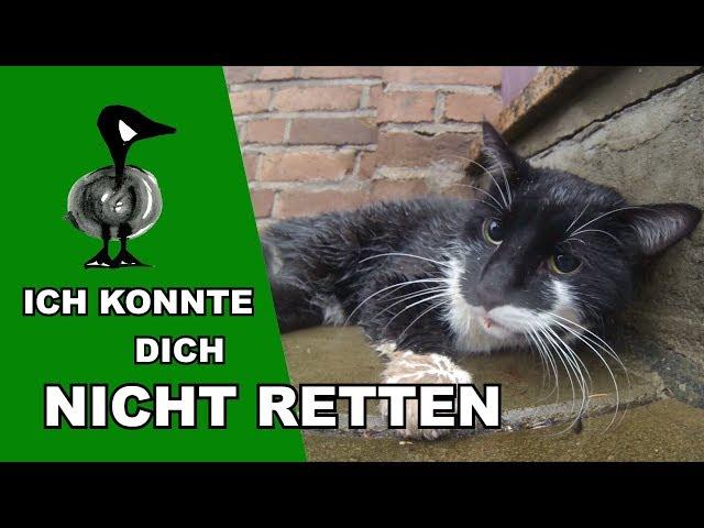 Das traurigste Tiernotruf-Video - Tiernotruf #187