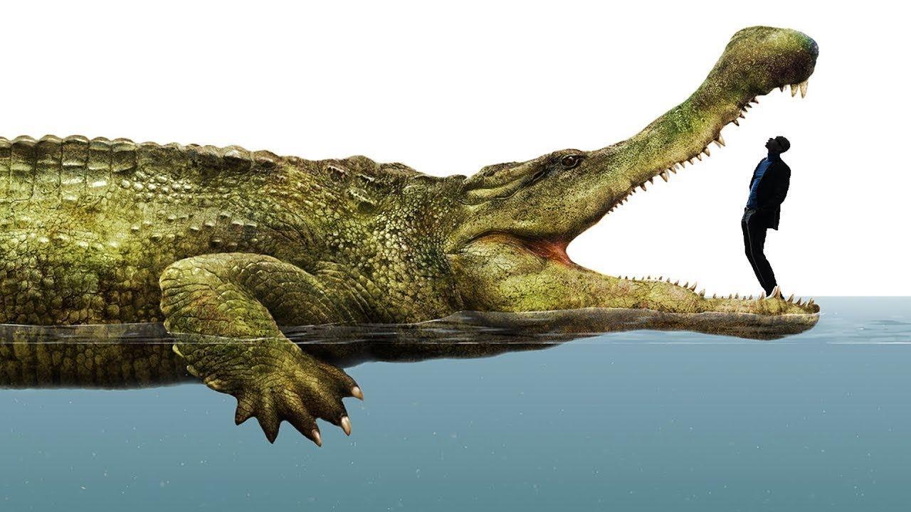 500,000,000 Yıl Öncesinde Yaşamış DEV Hayvanlar