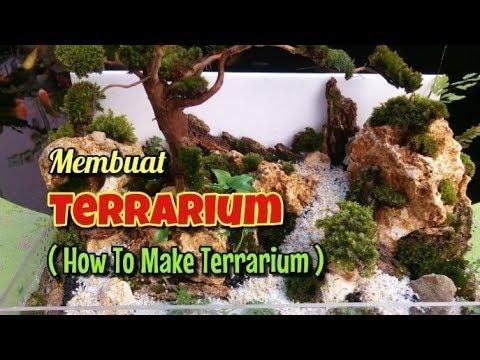 membuat-terrarium-dengan-tanaman-dan-moss-untuk-pemula