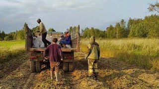 Сбор картофеля 2020, стройка и заготовки. Жизнь в деревне